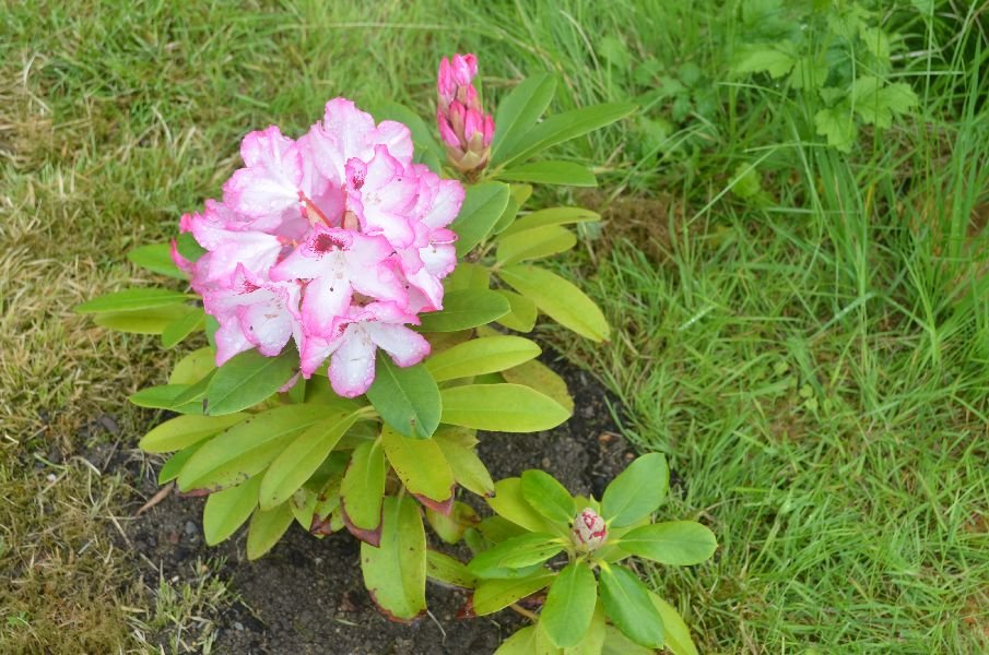 Zahradničíme:)